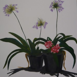 Potted agapanthus (given to Yan Zhang)